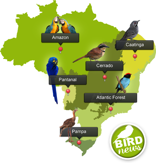 Birding Brazil Tours The Best And Photography Tour Experience In